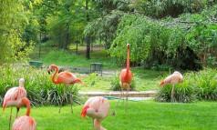 paris-jardin-des-plantes-flamingos