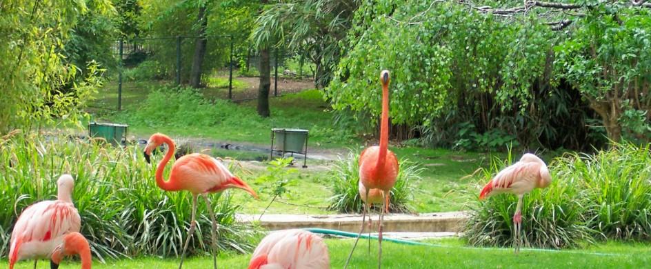 paris-jardin-des-plantes-flamingos The most beautiful gardens in Paris The most beautiful gardens in Paris paris jardin des plantes flamingos 944x390