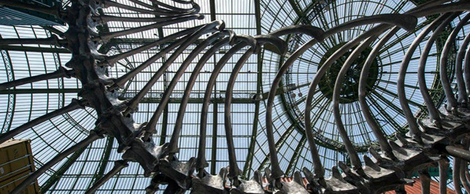 Huang Yong Ping: 'Empires' for Monumenta 2016 in Paris Huang Yong Ping Huang Yong Ping: 'Empires' for Monumenta 2016 in Paris Huang Yong Ping    Empires    for Monumenta 2016 in Paris 6 g 944x390
